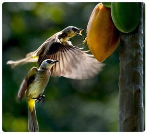 birds & fruit