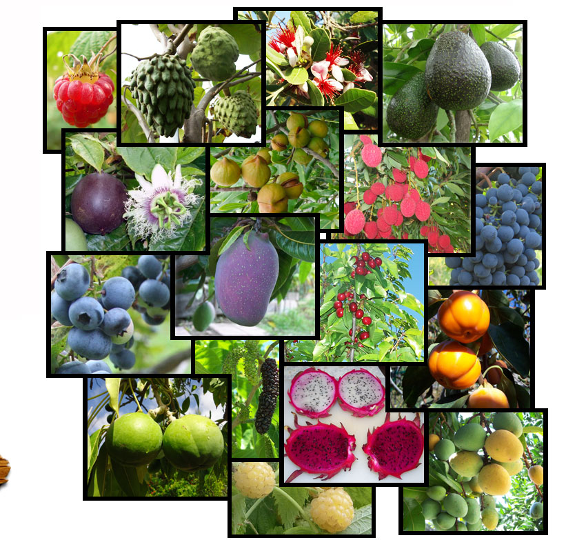 Fruit Mosaic